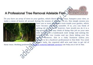 Tree removal service Adelaide �