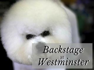 Backstage at Westminster