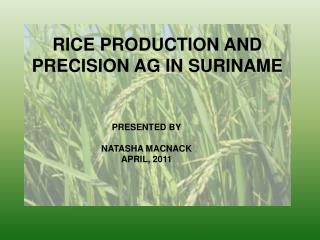 RICE PRODUCTION AND PRECISION AG IN SURINAME