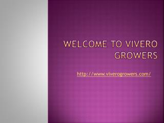 Viverogrowers - Screening plants | Plants dripping springs