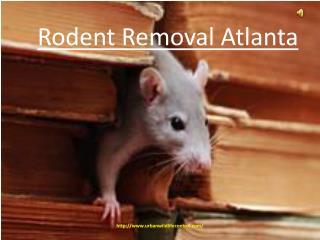 Rodent Removal Atlanta