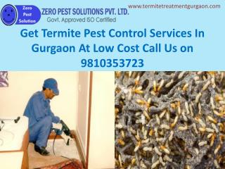 Get Termite Pest Control Services In Gurgaon At Low Cost Call Us 9810353723