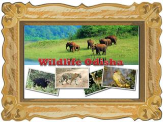 wildlife odisha