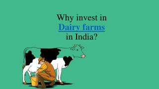 Why Invest in Dairy Farms in India
