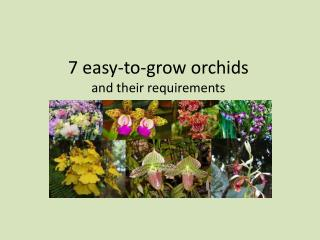 7 Easy-to-grow orchids and their growing requirements