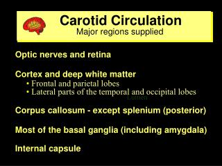 Carotid Circulation                         Major regions supplied