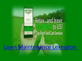 Lawn Maintenance Lexington