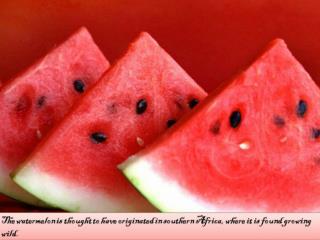 History of watermelon