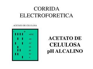 CORRIDA ELECTROFORETICA