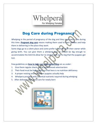 Dog Care during Pregnancy