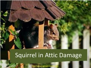 Squirrels in Attic Damage