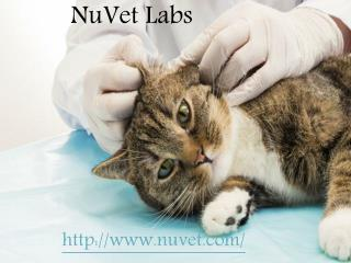 NuVet Plus Reviews - NuVet Reviews - NuVet Plus Reviews