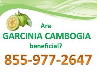 Buy garcinia cambogia online