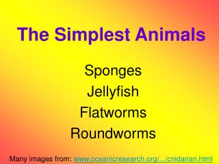 The Simplest Animals