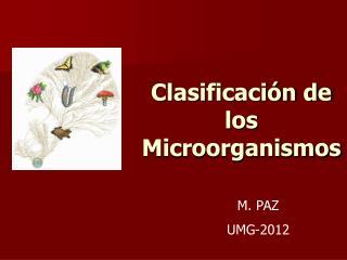 Clasificaci n de los Microorganismos