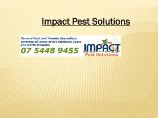 Pest Control Sunshine Coast