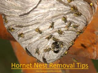 Hornet Nest Removal Tips