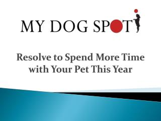 Resolve to Spend More Time with Your Pet This Year