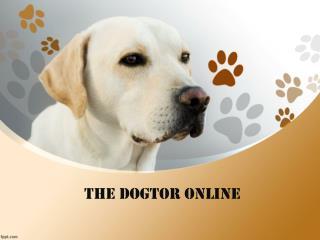 Thedogtoronline.com