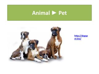 Dog Boarding Encinitas  Daycare San Diego Vista