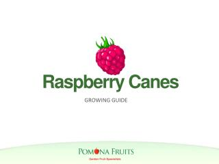 Raspberry Canes Growing Guide