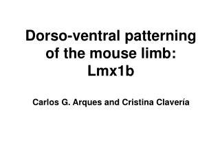 Dorso-ventral patterning of the mouse limb: Lmx1b