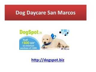 Dog Daycare Del mar