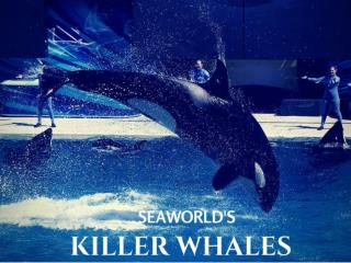 SeaWorld's killer whales