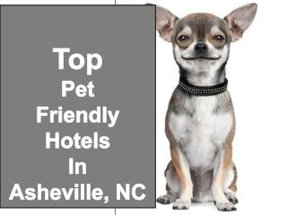 Top Pet Friendly Hotels & Lodging Asheville, NC