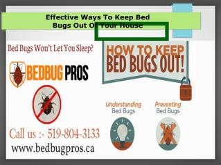 Effective Tips For The Bed Bug Removals - Bed Bug pros