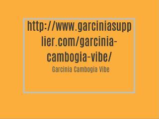 http://www.garciniasupplier.com/garcinia-cambogia-vibe/