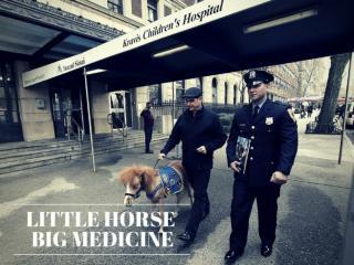 Little horse,big medicine