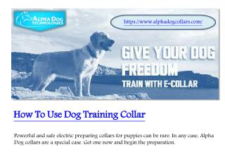 How To Use Dog Training Collar
