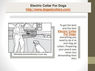 Electric collar for dogs
