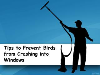 Tips to Prevent Birds from Crashing into Windows