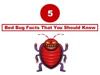 5 Bed Bug Facts That You Should Know