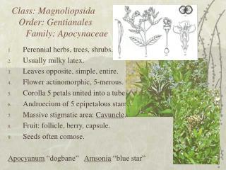 Class: Magnoliopsida    Order: Gentianales       Family: Apocynaceae