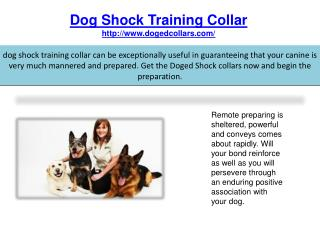Dog shock training collars