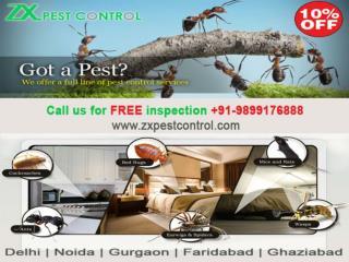 pest control ghaziabad