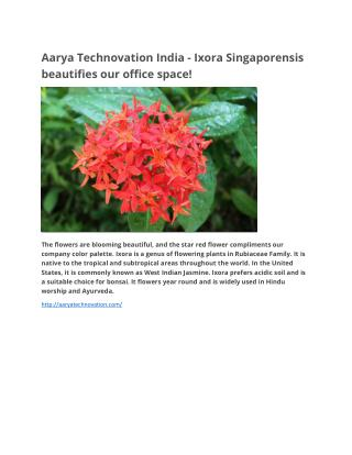 Aarya technovation india -  Ixora Singaporensis beautifies our office space!