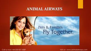 Animal Airways Revolutionizes Pet & Family Travel with Flight Management Service