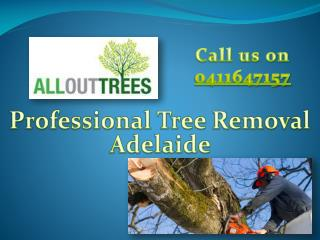 Affordable Tree Removal Adelaide