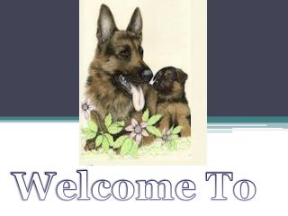 German Shepherd Dog and Puppy Training Houston
