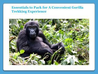 A Convenient Gorilla Trekking Experience