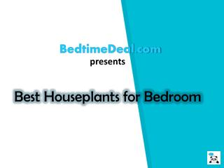 BEST HOUSEPLANTS FOR BEDROOM TO PURIFYING AIR