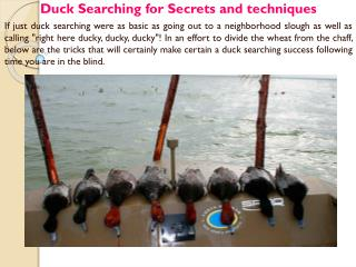 Duck Searching for Secrets and techniques