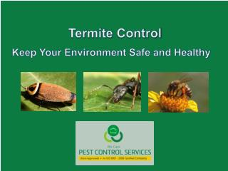 Termite Control - Keep Your Environment Safe and Healthy