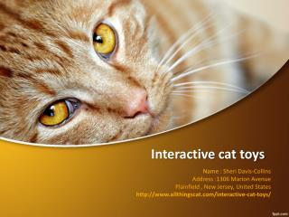 Essential products for cats-Interactive cat toys-Catz