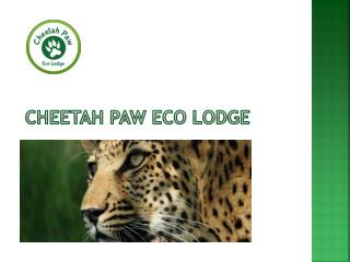 Best option for the calm and peaceful environmental lodge