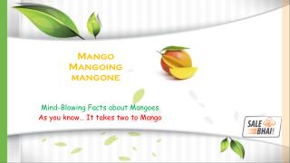 Mind-Blowing Facts About Mangoes